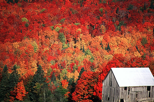 fall_foliage_new_brunswick